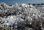 Camargue-Aigues Mortes. In estate il spesso il Mistral soffia fortissimo a pelo d'acqua nelle vasche di sale. Il vento unito alta temperatura dell'acqua porta alla formazione di una spuma salate che comincia ad essere trasportata