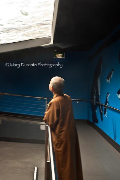 monk observing penquin
