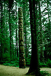 AK: Alaska Sitka National Historic Park, totem pole in rain forest  .Photo Copyright: Lee Foster, lee@fostertravel.com, www.fostertravel.com, (510) 549-2202.Image: aksitk203