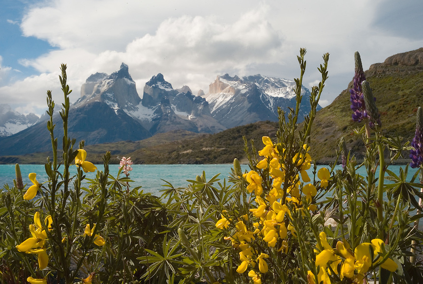 The Cuernos del Paine, or Paine Horns, stand above spring flowers and Lago Pehoe at Torres del Paine National Park in southern Chile. (Kevin Moloney for the New York Times)