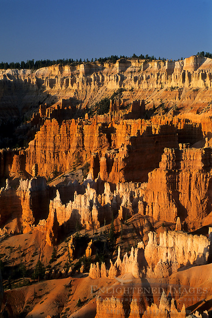 Sunrise light on Hoodoos, from Sunrise Point, Bryce Canyon National Park, UTAH