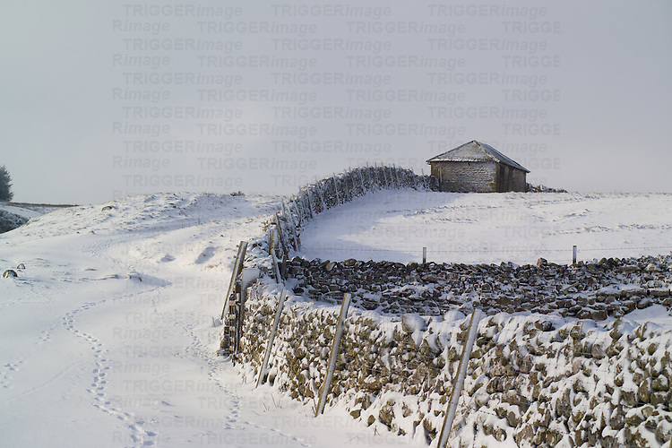 Field shelter and drystone wall on snow covered moorland
