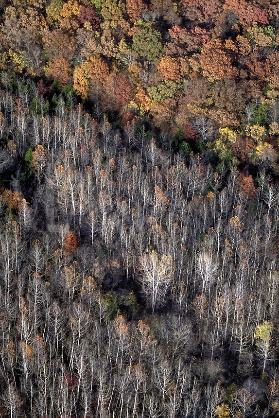 Aerial of wooded area with trees in fall color. Kansas USA Douglas County.