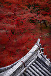 Artistic view of traditional Japanese temple building roof with clay tile, Kawara, in colorful autumn scenery at Nanzen-ji Zen Buddhist temple complex in Kyoto, Japan Image © MaximImages, License at https://www.maximimages.com