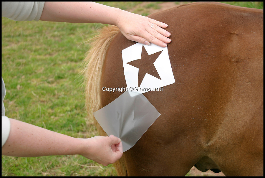 BNPs.co.uk (01202 558833)<br /> Pic: Glamourati/BNPS<br /> <br /> ***Please Use Full Byline***<br /> <br /> A staff member applies the Glamourati horse transfer product. <br /> <br /> <br /> <br /> A mum of two is taking the equestrian world by storm after inventing temporary tattoos for horses made from glitter.<br /> <br /> Entrepreneurial Sally Rees, 40, dreamed up the idea for the sparkly marks while looking for a way to generate extra income while looking after her two young children at home.<br /> <br /> The former beauty spa director was painting children's faces with glittery designs at parties when it dawned on her that she could transfer her skill to horses.<br /> <br /> A year after her eureka moment Sally has turned her idea into a fully-fledged business that is catching the eye of the horse owners and riders around the country.<br /> <br /> Sally's equestrian glitter tattoo kits cost between £19.99 and £59.99 and can be bought from her website glamouratiuk.com.