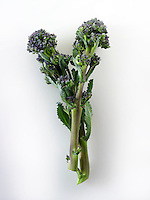 Fresh purple brocoli spears