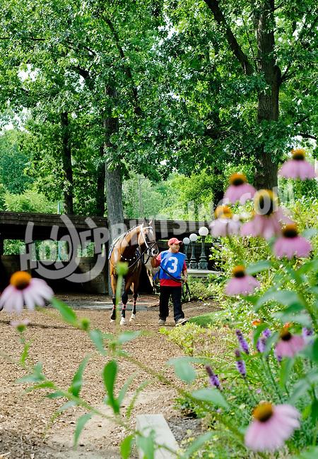 Hard Line at Delaware Park on 7/5/12