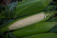 Fresh corn for sale at a local farmers market.