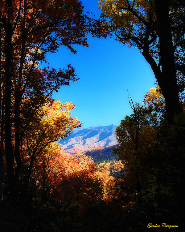An Autumn view of the Great Smoky Mountains through the forest canopy on Campbell Lead Road above Gatlinburg, Tennessee. Ortonized in Photoshop. Smoky Mountain photos by Gordon and Jan Brugman.