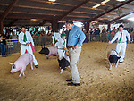 Swine Showmanship. 80th Amador County Fair, Plymouth, Calif.<br /> .<br /> .<br /> .<br /> .<br /> #AmadorCountyFair, #1SmallCountyFair, #PlymouthCalifornia, #TourAmador, #VisitAmador