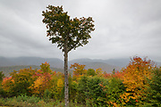 "Scenic view on a rainy autumn day from the Hancock Trailhead parking lot, along the Kancamagus Scenic Byway, in the New Hampshire White Mountains USA. This tree is known as the ""The Heart"" tree."