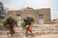 Nepalese woman carry basket of grass on their back near Kathmandu, Nepal. May 9, 2015