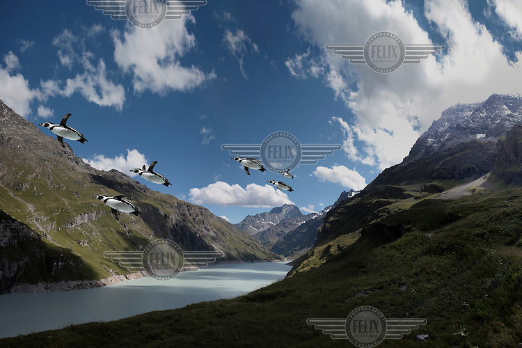 A composite, manipulated image showing the impact of climate change in an imagined future. Here, a flock of Penguins, who have evolved to fly in order to migrate to more suitable enviroments, glide above a Swiss mountain lake.