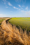 Flooded rice field in spring, Sutter County, Calif.