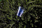 An abandoned cup sits on a bush following the Sun City Parade and Brats and Beer party outside of the Sundial Recreation center in Sun City, Arizona March 13, 2010. 2010 marks the 50th anniversary of Sun City, the first planned retirement city in the United States.