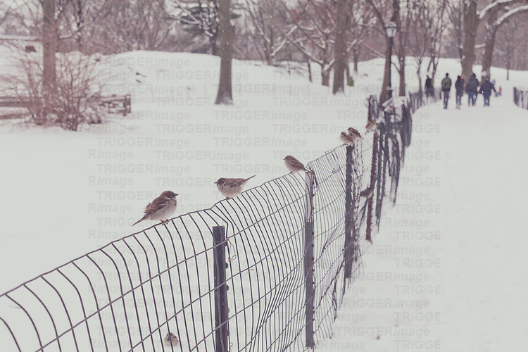 a group of birds sits on a fence in a snow white central park, new york