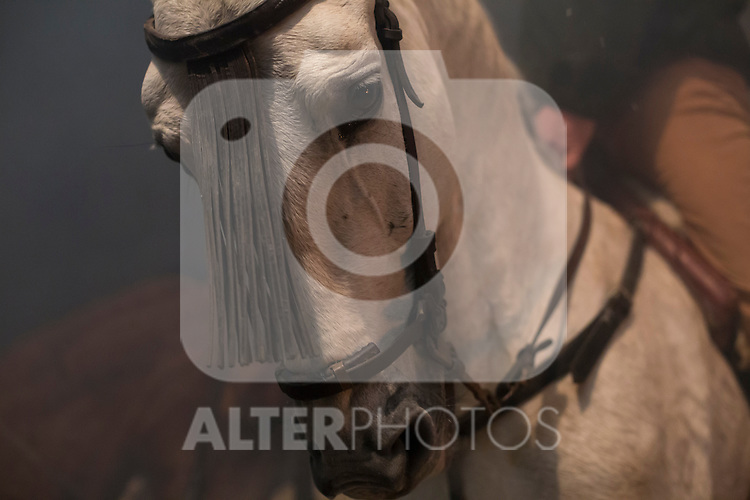 A horse awaits before Las Luminarias celebration beginning, as part of a ritual in honor of Saint Anthony the Abbot, the patron saint of domestic animals, in San Bartolome de Pinares, Spain. January 16, 2015. (ALTERPHOTOS/Victor Blanco)