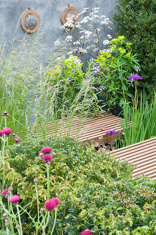 Nature Ascending garden, designed by Angus Thompson and Jane Brockbank, gold medal winner, RHS Chelsea Flower Show 2009. Plants include: Siberian iris (Iris sibirica 'Linda Mary'), Cirsium rivulare 'Atropurpureum', Yew (Taxus baccata), Tufted hair grass (Deschampsia cespitosa).