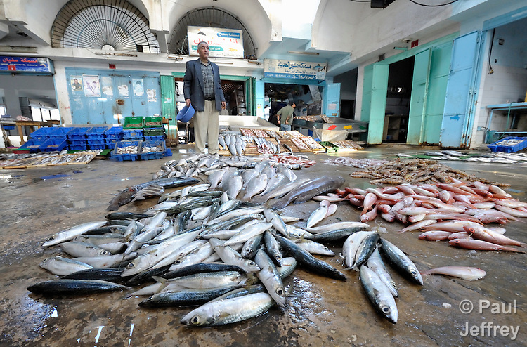 A portion of the morning's catch is on display at the wholesale fish market in Gaza City. Under the 1993 Oslo Peace Accords, the people of Gaza were allowed to fish out to 20 nautical miles from their coastline, yet since the Israeli military imposed a naval blockade in 2007 they have been limited to just three nautical miles. In practice, fishers who venture beyond two nautical miles are shot at by Israeli gunboats; several have been injured and some killed. Despite having 40 kilometers of coastline and a long tradition as fishers, many fishers are unemployed and the people of Gaza are forced to import fish from Israel. And what fishing they can do close to shore mostly involves the harvest of immature fish, which biologists warn has a negative impact on fish stocks in the region....