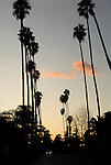 Car driving on palm tree lined road at dusk in Los Angeles, CA