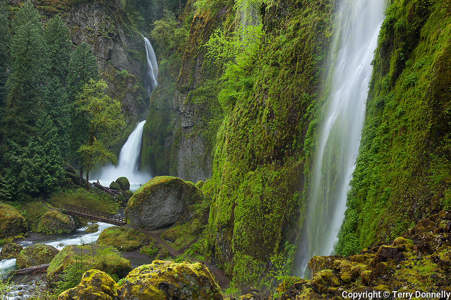 Columbia Gorge National Scenic Area, Mouunt Hood National Forest, OR<br /> Wahclella Falls in a moss covered northwest rainforest canyon