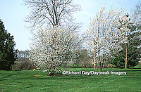63808-024.12 Serviceberry Tree and shrub (Amelanchier arborea) in yard landscaped for birds  Marion Co.  IL