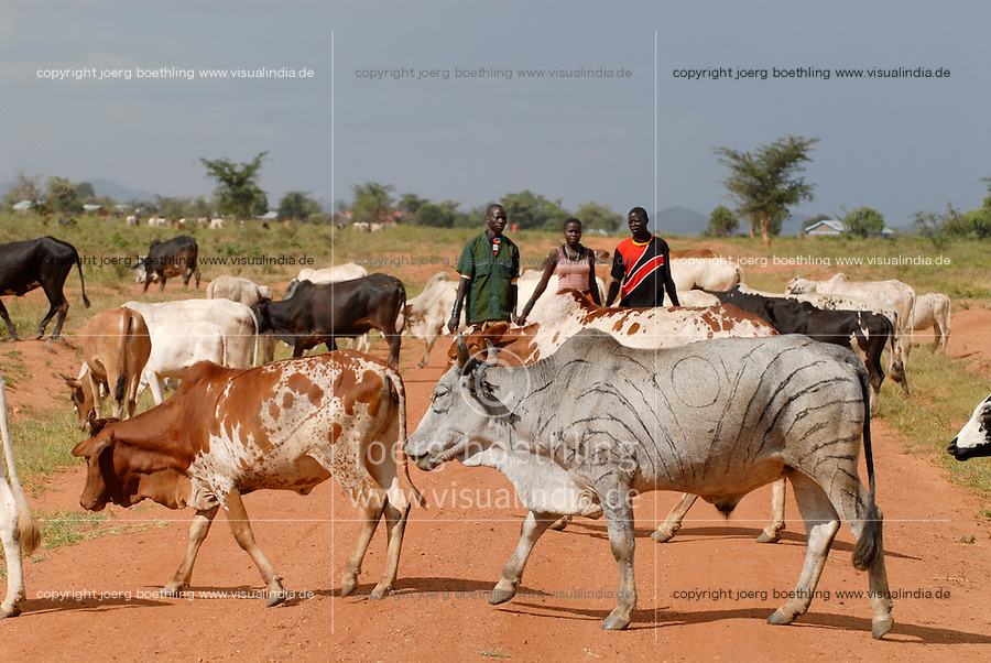 "Afrika Uganda Karamoja , Volk der Karimojong -  Nomaden Halbnomaden ethnische Gruppe Afrikaner Indigene Voelker afrikanisch xagndaz | .Africa Uganda Karamoja , Karimojong a pastoral tribe .  -  indigenous people  .| [ copyright (c) Joerg Boethling / agenda , Veroeffentlichung nur gegen Honorar und Belegexemplar an / publication only with royalties and copy to:  agenda PG   Rothestr. 66   Germany D-22765 Hamburg   ph. ++49 40 391 907 14   e-mail: boethling@agenda-fototext.de   www.agenda-fototext.de   Bank: Hamburger Sparkasse  BLZ 200 505 50  Kto. 1281 120 178   IBAN: DE96 2005 0550 1281 1201 78   BIC: ""HASPDEHH"" ,  WEITERE MOTIVE ZU DIESEM THEMA SIND VORHANDEN!! MORE PICTURES ON THIS SUBJECT AVAILABLE!! ] [#0,26,121#]"