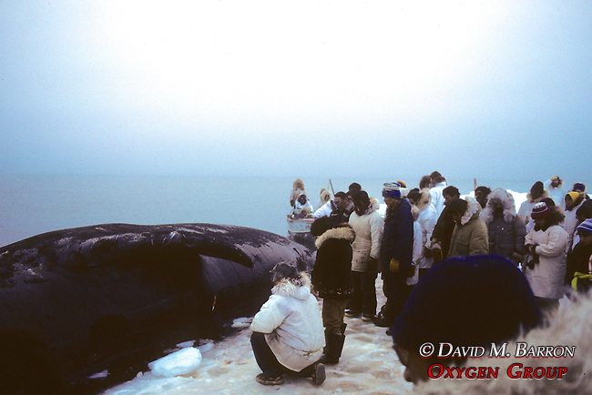 Praying To Bowhead Whale