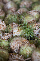 Celeriac stored in one ton boxes <br /> Picture Tim Scrivener 07850 303986<br /> tim@agriphoto.com<br /> &hellip;.covering agriculture in the UK&hellip;.