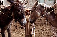 Demolition of a old house at the Kashmiri Bazaar in the old town of Lahore.<br /> 15.2.2001, Lahore/Pakistan<br /> Copyright: Christian-Ditsch.de<br /> [Inhaltsveraendernde Manipulation des Fotos nur nach ausdruecklicher Genehmigung des Fotografen. Vereinbarungen ueber Abtretung von Persoenlichkeitsrechten/Model Release der abgebildeten Person/Personen liegen nicht vor. NO MODEL RELEASE! Nur fuer Redaktionelle Zwecke. Don't publish without copyright Christian-Ditsch.de, Veroeffentlichung nur mit Fotografennennung, sowie gegen Honorar, MwSt. und Beleg. Konto: I N G - D i B a, IBAN DE58500105175400192269, BIC INGDDEFFXXX, Kontakt: post@christian-ditsch.de<br /> Bei der Bearbeitung der Dateiinformationen darf die Urheberkennzeichnung in den EXIF- und  IPTC-Daten nicht entfernt werden, diese sind in digitalen Medien nach §95c UrhG rechtlich geschuetzt. Der Urhebervermerk wird gemaess §13 UrhG verlangt.]