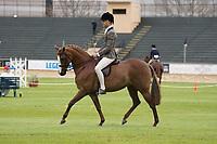 Novice Hunter Pony over 13.2 NE 14hh