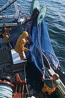 """56 Morbilhan/ Quiberon: Pèche à la sardine sur le sardinier """"Kanedeven"""""""