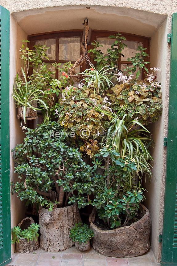 Ramatuelle : fenêtre et plantes dans la rue du Centre // France, Ramatuelle: plants and a window
