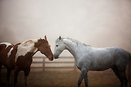 Two horses embracing each other.