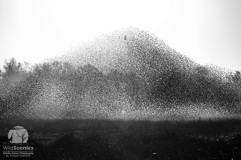 'Apex predator'<br />