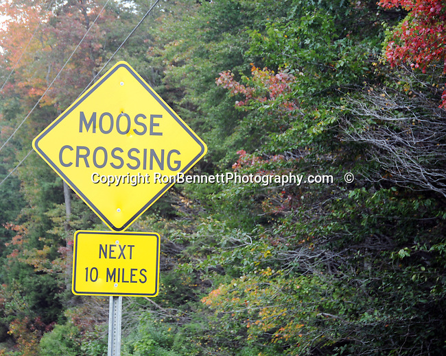 Moose Crossing Maine,  Maine, New England region of northeatern United States, boardered by Atlantic Ocean to the east and south, Maine is the northermost and easternmorst portion of New England, jagged rocky coastline, rolling mountains, heavily forested interior picturesque waterways, seafood cuisine, lobster and clams, European settlement in Maine was 1604, 23rd state March 15 1820, Dirigo, Maine is The Pine Tree State, Maine Stock and Fine Art Photography.  All Rights Reserved RonBennettPhotography.com All Photographs for SALE.