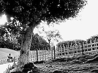 """Black & white fine art stock photo of a girl reading a book near a fence in a beautiful garden.<br /> <br /> View the gallery - """"India-Nature & Landscapes"""" for the color version of this image."""