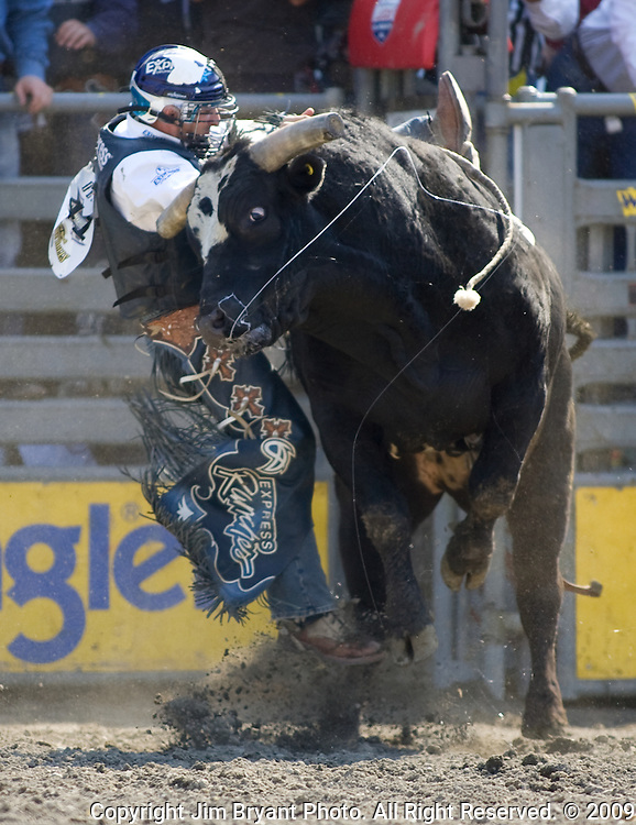 Chad Denton from Berry Creek, CA., tries to hang onto Stone Cold during the Xtreme Bull Riding Competition at the Kitsap County Fair and Stampede  held Aug. 26 to Aug. 30, 2009 in Silverdale, WA. Jim Bryant Photo. All Right Reserved. © 2009