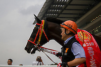 TOKYO,JAPAN-JUNE 19: Gold Dream attends after winning the Unicorn Stakes at Tokyo Racecourse on June 19,2016 in Fuchu,Tokyo,Japan (Photo by Kaz Ishida/Eclipse Sportswire/Getty Images)