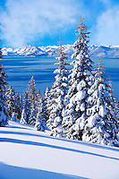 A picture of snow-covered pine trees on a beautiful winter morning above Lake Tahoe.