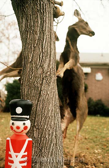 Smiling Christmas soldier in front of three dead deer, hanging from a tree.<br />