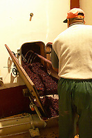 In the winery a man raking out what remains after emptying the wine after fermentation, grape skins, pips, called marc. Chateau Mourgues du Gres Grès, Costieres de Nimes, Bouches du Rhone, Provence, France, Europe