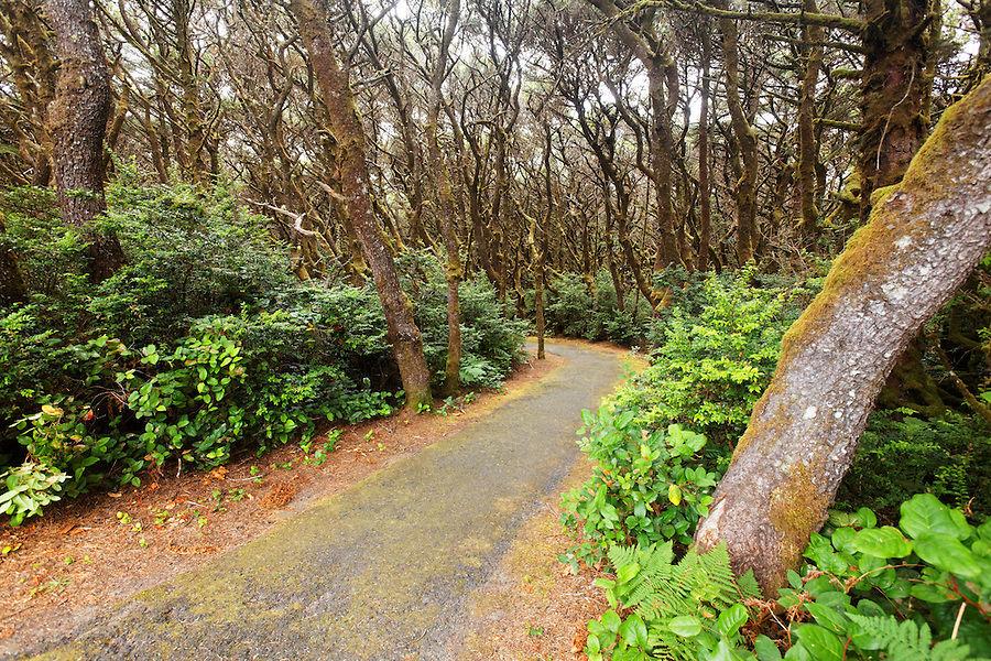 Trail through coastal forest, Oregon Coast, Oregon, USA, North America
