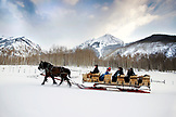 USA, Colorado, Aspen, horses pull a sleigh full of people through the Elk Mountains up to the Pine Creek Cookhouse for dinner, Ashcroft