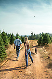 USA, Oregon, Corbett, Trout Creek Tree Farm, owners Terri Barnes and Tom Norby on their 80 acre Noble fir Christmas tree farm which is nestled in the foothills near Mt. Hood