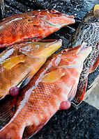 Fishermen prepare the catch for sale. Isla Mujeres, Quintana Roo, Mexico