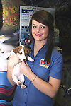 Jack Russell puppy at the Pet Centre, Boyne Shopping Centre, Drogheda...Photo NEWSFILE/Jenny Matthews.(Photo credit should read Jenny Matthews/NEWSFILE)....This Picture has been sent you under the condtions enclosed by:.Newsfile Ltd..The Studio,.Millmount Abbey,.Drogheda,.Co Meath..Ireland..Tel: +353(0)41-9871240.Fax: +353(0)41-9871260.GSM: +353(0)86-2500958.email: pictures@newsfile.ie.www.newsfile.ie.FTP: 193.120.102.198.