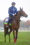 November 1, 2018: Polydream (IRE), trained by Freddy Head, exercises in preparation for the Breeders' Cup Mile at Churchill Downs on November 1, 2018 in Louisville, Kentucky. Jamey Price/Eclipse Sportswire/CSM