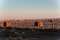 Warm sunset light glows on round hay bales,  scattered around a field in northeast Colorado.