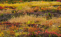 Subalpine meadow in autumn